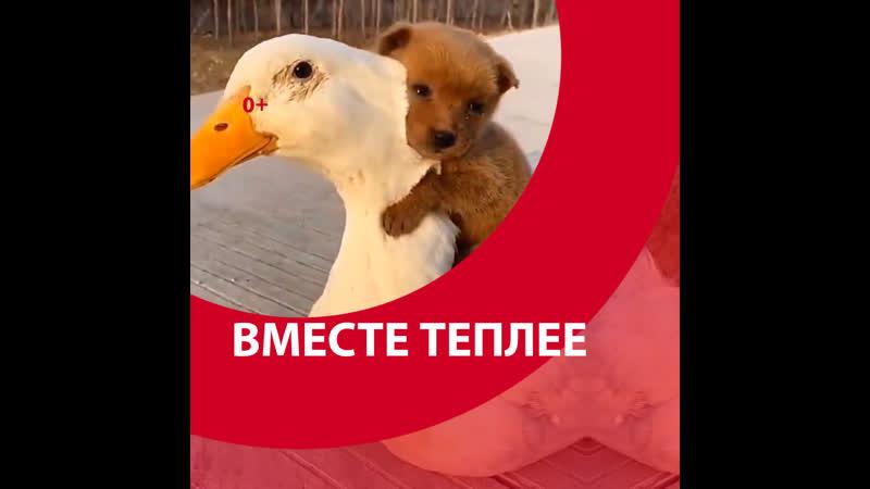 Вместе теплее Москва FM
