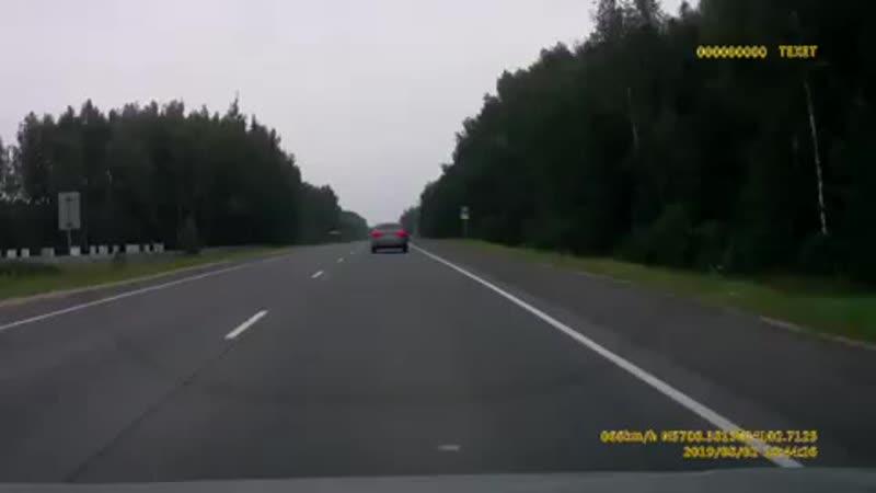 Медведь в Ивановской области.mp4
