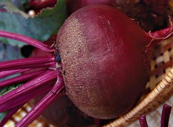 КАК СОХРАНИТЬ СВЕКЛУ В КВАРТИРЕ  Сложите корнеплоды в полиэтиленовые...