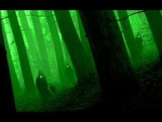 Гулянья НЕЧИСТИ в ночном лесу.