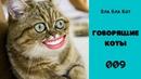 Говорящие коты. Приколы с животными. Смешные животные. Лучшая подборка 009