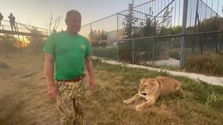 У львицы Клавы ТЯЖЕЛЫЕ РОДЫ !
